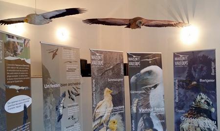 expo-vautours-2017